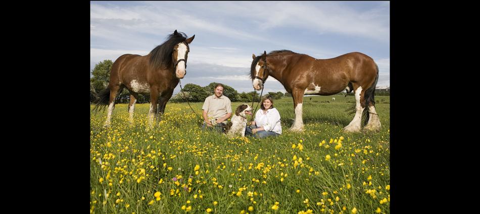 portraits, pet, location, horses, family,